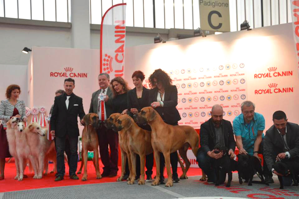 Alani dei Cinegeti, best Breed Group at Reggio Emilia International dog show